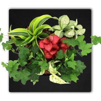 tableau_vegetal_nid_d_amour_noir.jpg