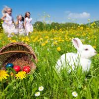 Les meilleurs Chasses aux Oeufs Pâques 2017