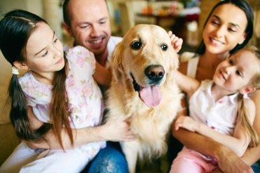 chien-bien-dans-sa-famille